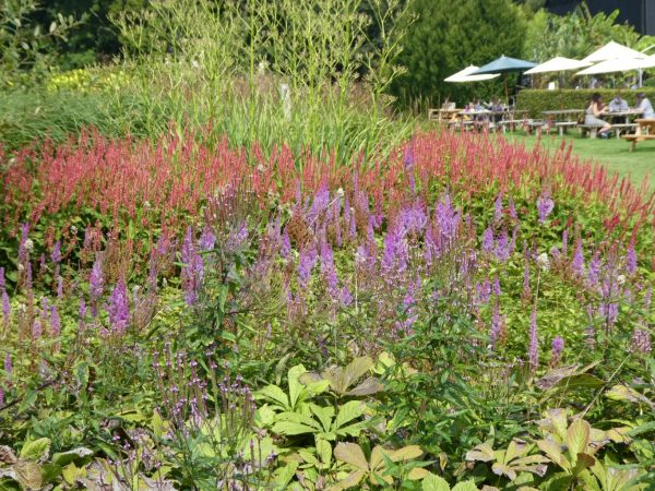 National Garden Scheme – garden open for Charity