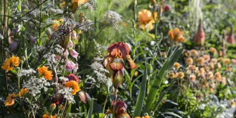 Planting for All Year Interest with Juliet Sargeant