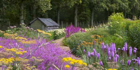 Planting a Prairie Garden Large or Small with Juliet Sargeant